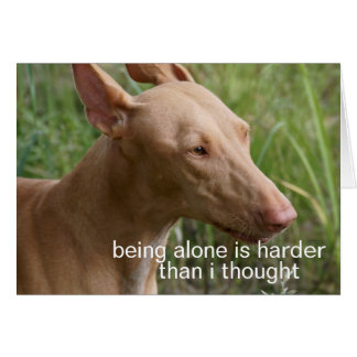 being alone dog cards
