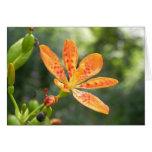 Belamcanda Chinensis Bloom Greeting Card
