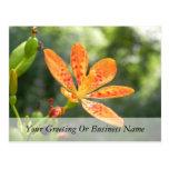 Belamcanda Chinensis Bloom Post Cards