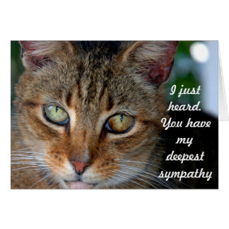 Belated cat sympathy card