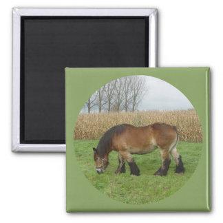 Belgian Draft Horse-brown with black mane Square Magnet