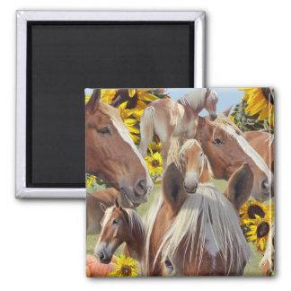 Belgian Draft Horse Collage Square Magnet