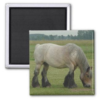 Belgian Draft Horse-color grey grazing Square Magnet