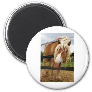 Belgian Draft Horse, Got Carrots? 6 Cm Round Magnet