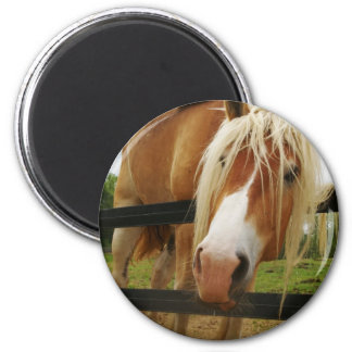 Belgian Draft Horse, Got Carrots? Magnets