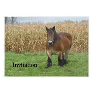 Belgian Draft Horse-in front of a corn field 13 Cm X 18 Cm Invitation Card