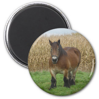 Belgian Draft Horse-in front of a corn field 6 Cm Round Magnet