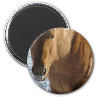 Belgian Draft Horse  Magnet Refrigerator Magnets