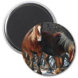 Belgian Draft Horses Round Magnet
