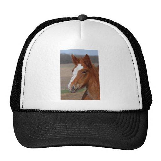 Belgian filly hat
