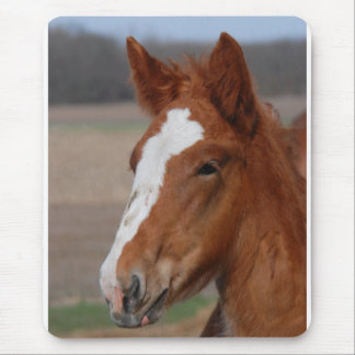 Belgian filly mouse pad