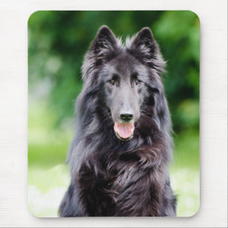 Belgian Groenendael dog, Belgian Shepherd photo Mouse Pad