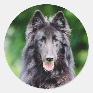 Belgian Groenendael dog, Belgian Shepherd photo Round Sticker