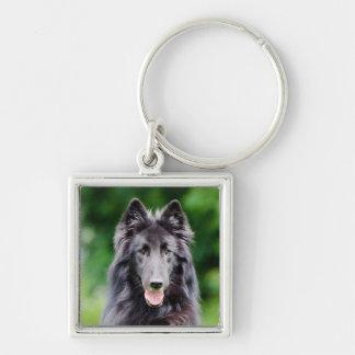 Belgian Groenendael dog, Belgian Shepherd photo Silver-Colored Square Key Ring