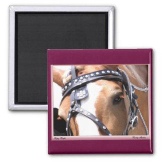Belgian Horse Magnet