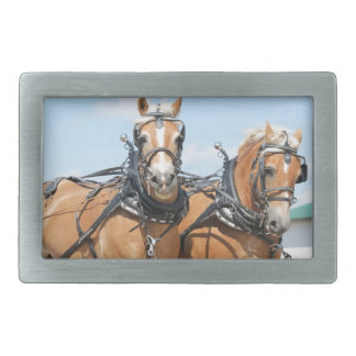 Belgian Horses Rectangular Belt Buckles