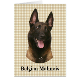 belgian malinois card