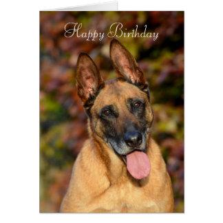 Belgian Malinois dog custom birthday card