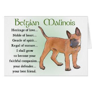 Belgian Malinois Gifts Greeting Card