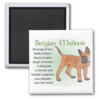 Belgian Malinois Gifts Square Magnet