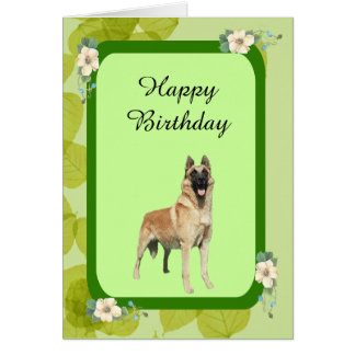 Belgian Malinois, Happy Birthday on Green Floral Greeting Card