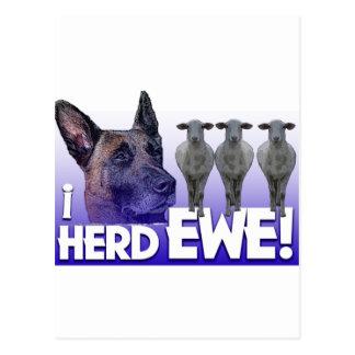 Belgian Malinois -I Herd EWE - PUN - I HEARD YOU Postcard