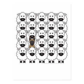 Belgian Malinois in the Sheep Postcard