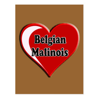 Belgian Malinois on Heart for dog lovers Postcards