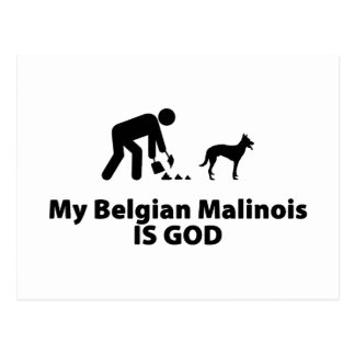 Belgian Malinois Post Card