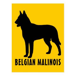 Belgian Malinois Postcards