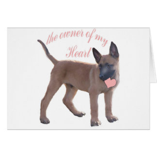 Belgian Malinois Puppy Cards