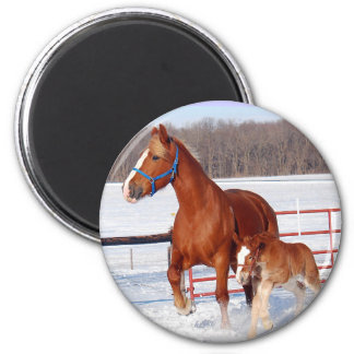 Belgian Mare and Filly 6 Cm Round Magnet