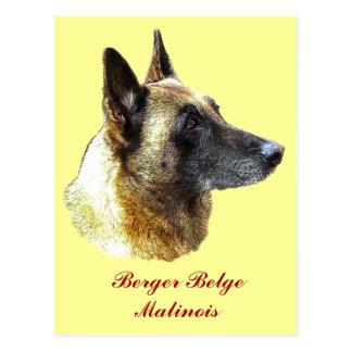 Belgian postcard shepherd malinois