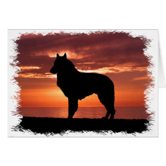 Belgian Sheepdog Card