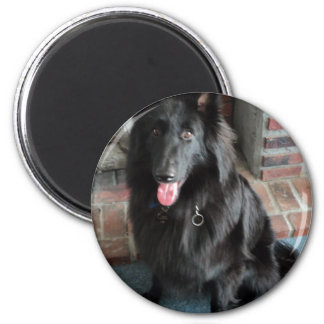 "Belgian Shepherd aka ""The Black Wolf"" Magnets"