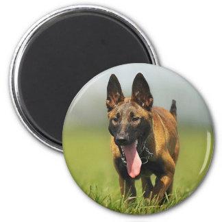 Belgian Shepherd Dog Refrigerator Magnets