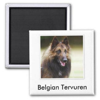 Belgian Tervuren Magnet