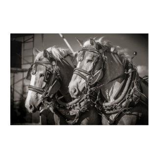 Belgium draught horses acrylic wall art
