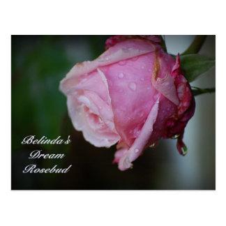 Belinda s Dream Rosebud Postcard