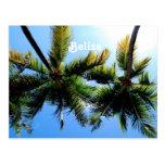 Belise Palm Trees