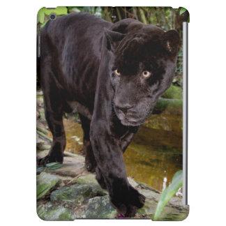 Belize City Zoo. Black panther
