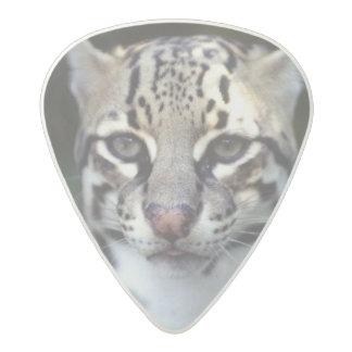 Belize, Cockscomb Jaquar Preserve, Ocelot Acetal Guitar Pick