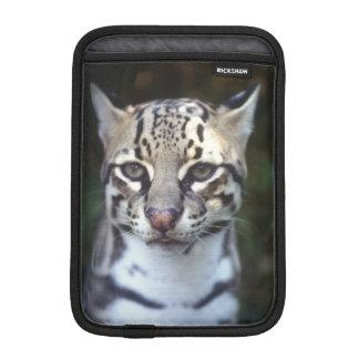 Belize, Cockscomb Jaquar Preserve, Ocelot iPad Mini Sleeve