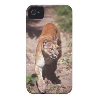Belize, Jaquar Preserve iPhone 4 Case