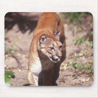 Belize, Jaquar Preserve Mouse Pad