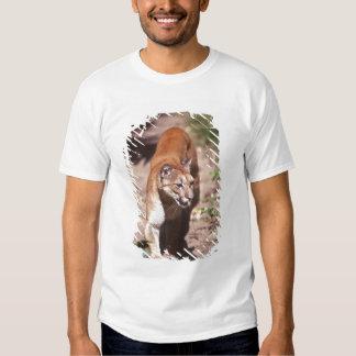 Belize, Jaquar Preserve Shirt