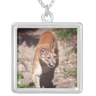 Belize, Jaquar Preserve Silver Plated Necklace