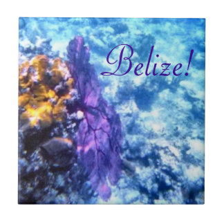 Belize! Purple Sea Fan  Tile