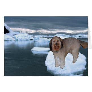 Bella On An Iceburg In Antarctica Greeting Cards