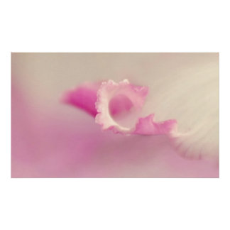 Bella pink one print